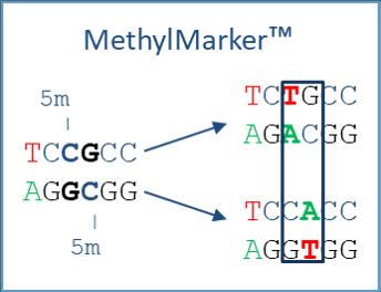 MethylMarker Illustrative method diagram