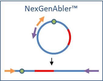 NexGenAbler NGS Sample Prep Schematic